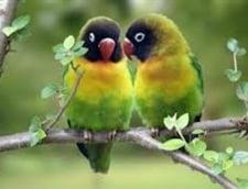 De Dragobete, saruta romaneste! Traditii si obiceiuri