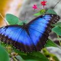 De ce culoarea albastră este atât de rară în natură: Răspunsul experților VIDEO