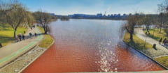 De ce este rosie apa lacului IOR, din Bucuresti. Rezultatele analizelor facute de Apele Romane
