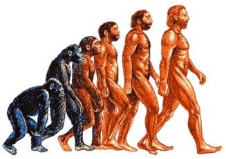 De ce nu ne-am tras din maimuta, cu par cu tot?