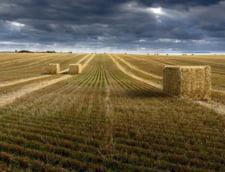 """De ce nu poate Romania profita de productiile record din agricultura. Economist: """"Ne lipseste capitalul uman si financiar. Infrastructura este la pamant"""""""