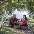 De ce se văruiesc pomii fructiferi toamna. Procesul prin care aducem beneficii maxime copacilor