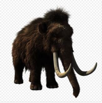 De ce si cum au disparut ultimii mamuti