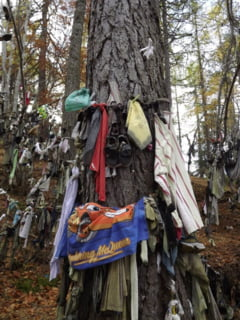 De ce sunt plini de haine unii copaci din Marea Britanie (Galerie foto)
