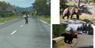 De la inceputul anului: peste 350 de apeluri la 112 din cauza ursilor