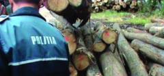 De la inceputul anului si pana in prezent, Peste 2.000 de metri cubi de masa lemnoasa confiscata