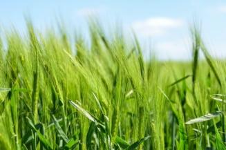 Deficitul Romaniei in comertul cu produse agroalimentare, in scadere cu aproape 9% in primul trimestru