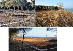 Defrisare masiva in statiunea Olimp. Padurea de pe litoralul romanesc, taiata pentru a face loc unui turn de zece etaje