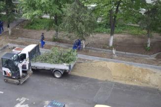 Defrisarile continua in Sectorul 3: Oamenii lui Negoita nu se mai opresc din taiat copaci pentru a face parcari