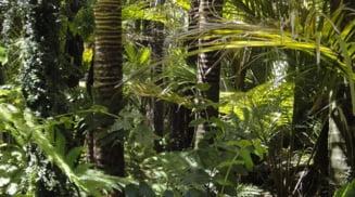 Defrisarile din Amazonia au crescut cu 100%. S-a taiat pe o suprafata cat statul Puerto Rico