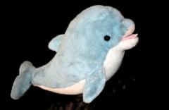 Delfini de plus cu tenta sexuala, la un magazin care vinde produse confiscate de autoritati