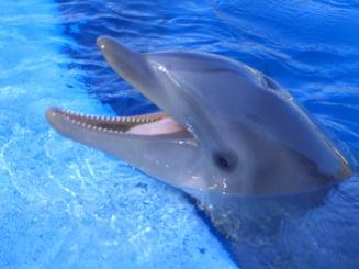 Delfinii au un al saselea simt: Pot detecta campurile electrice