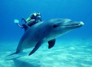 Delfinilor nu le place sa inoate cu oamenii