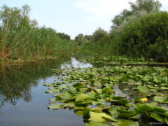 Delta Dunarii, serios afectata de seceta