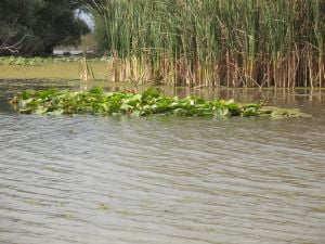 Delta Dunarii are nevoie de cadastru ca sa atraga bani de la UE