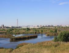 Delta Vacaresti, un colt de rai in inima Bucurestiului: scandalurile interminabile care o lasa a nimanui