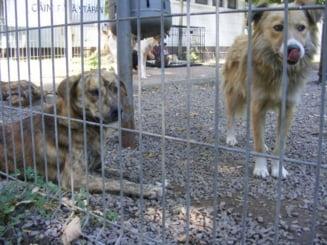 Deputatii au decis: E nevoie de referendum privind eutanasierea cainilor