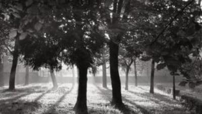 Descoperire macabra: barbat cu capul zdrobit intr-un parc din Capitala