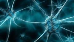 Descoperire medicala: Un virus traieste in intestinul uman si se hraneste cu bacterii