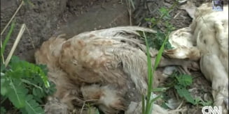 Descoperire socanta: 2.000 de animale moarte si vii, in casa unui barbat