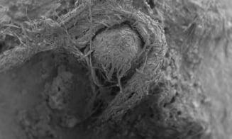 Descoperire uimitoare intr-o pestera din Franta: Are 50.000 de ani vechime!