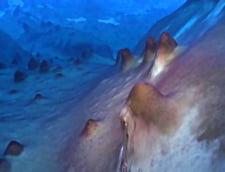 Descoperire uimitoare intr-un lac din Antarctica