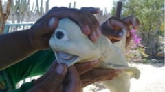 Descoperire uluitoare in burta unui rechin capturat in Indonezia. Pescarilor nu le-a venit sa creada ce-au vazut