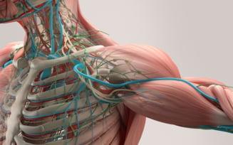 Descoperirea medicala inedita care schimba ce stiai despre corpul uman