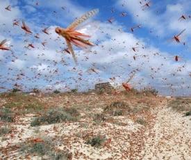 Dezastre biologice cauzate de insecte (Galerie foto)