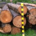 Dezastrul provocat de furtul de lemn din Apuseni. Prejudiciu de peste 100 milioane de lei in urma taierilor ilegale de paduri