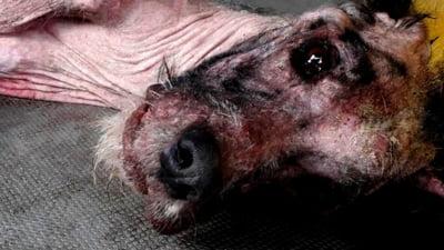 """Dezumanizarea societatii: Consilii locale care voteaza """"interzicerea cu desavarsire a hranirii cainilor fara stapan, pe domeniul public"""""""
