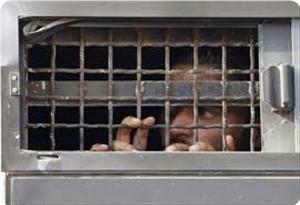 Dezvaluri infioratoare: Cum tortureaza Israelulul copiii palestinieni