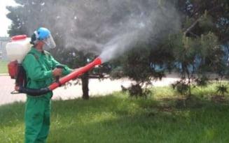 Din 22 mai incepe o noua etapa a dezinsectiei la sol. Apicultorii sunt sfatuiti sa-si protejeze albinele