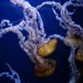 Din ce in ce mai multe meduze veninoase pe insulele turistice din Thailanda