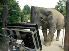 Dintre toate animalele, elefantii sunt singurii care inteleg matematica intr-un mod cat mai asemanator cu oamenii