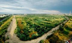 """Directorul Fundatiei Parcului National Vacaresti: """"Nu ne putem asuma masuri de conservare"""""""