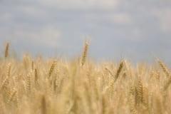 Disparitia subita a fermierilor ieseni