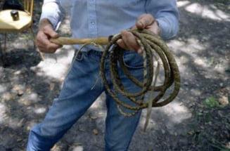 Doi barbati, retinuti pentru 24 de ore fiindca au ucis un cal. Animalul a fost schingiuit pana la moarte pentru ca n-a mai putut trage la caruta