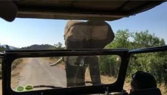 Doi duri fata in fata: Arnold Schwarzenegger si un elefant (Video)