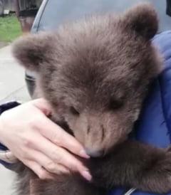 Doi pui de urs cazuti intr-un put au fost salvati de jandarmi, cu ursoaica in apropiere (Video)