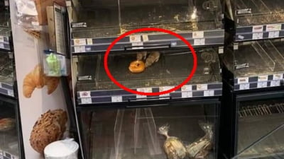 Doi sobolani fotografiati in jurul unui covrig intr-un magazin din Sectorul 1 al Capitalei