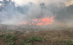 """Dosar penal dupa ce a ars o padure de 30 de hectare la Movileni. Primar: """"Nici nu cred ca le pasa, n-a dat nimeni pe-acolo, toata ziua"""""""