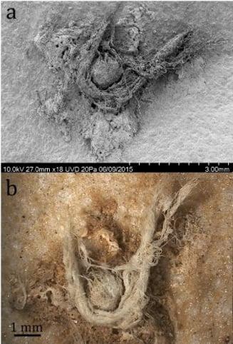 Dovada ca oamenii de Neanderthal erau mai inteligenti decat credeam. Descoperirea facuta intr-o pestera din Franta