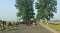Drumul judetean Baltati - Tibana va fi refacut