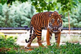 Dupa ce, anul trecut, o leoaica si-a ucis partenerul de 8 ani, o noua tragedie loveste un zoo din Londra
