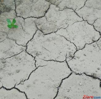 Dupa coronavirus, vine seceta extrema: Culturile, in pericol pe tot globul. In Romania, in unele zone nu a plouat de sase luni