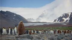 Dupa doar cateva ore petrecute langa o colonie de pinguini, iata ce li s-a intamplat cercetatorilor