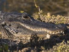Dupa inundatii, alerta de crocodili: E posibil sa nu ii vedeti, dar ei va pot vedea