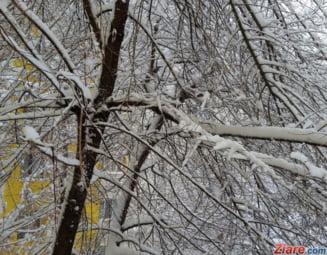 Dupa ninsori, vine gerul: Avertizare meteorologica de inghet si bruma