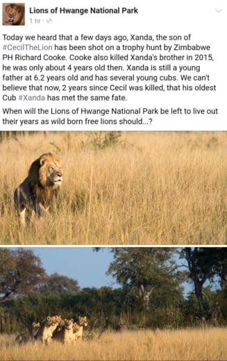 Dupa uciderea leului Cecil, care a revoltat o lume intreaga, si unul dintre puii sai a fost omorat
